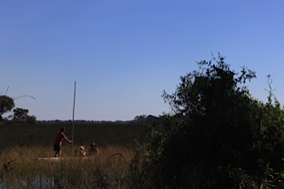 Swimming with Hippos in the Okavango Delta